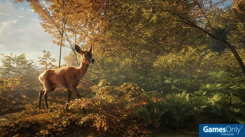 The Hunter: Call of the Wild 2019 Edition Xbox One PEGI bestellen